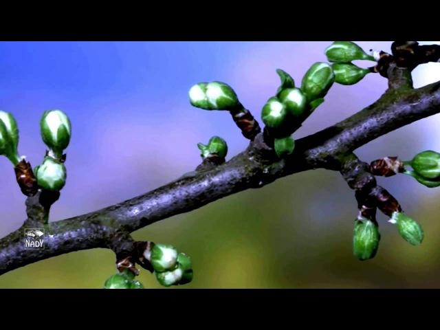 Stive Morgan - Ring Of Spring