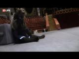 Мишка Ярик репетирует свой номер в цирке на Цветном бульваре