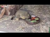 Три сурка обрели новый дом в Ленинградском зоопарке