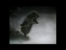 Сектор газа - Туман и Ёжик в тумане (монтаж от Сани)