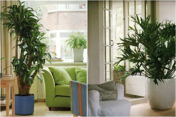 Цветы в виде дерева фото для комнаты доставка цветов цена