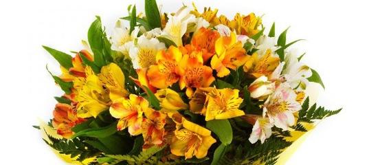 Гомель доставка цветов на дом заказ цветов спб с доставкой дешево 24 часа