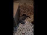 Мать запрещает кошке драть диван.