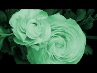 Цветы. Часть 3