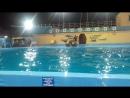 Дельфинарий Архипо-Осиповка дельфины