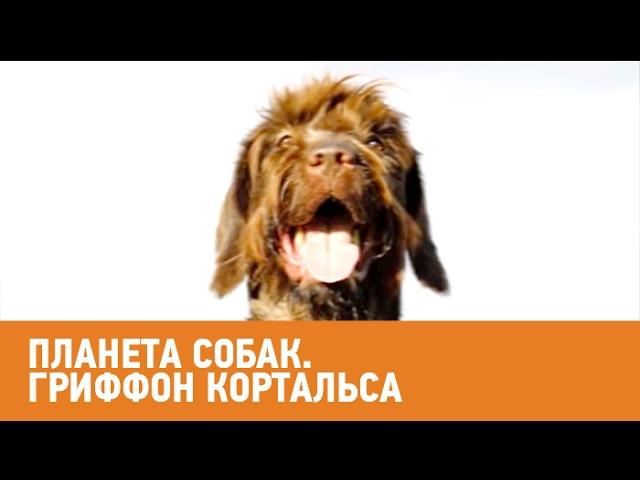 Гриффон Кортальса. Планета собак 🌏