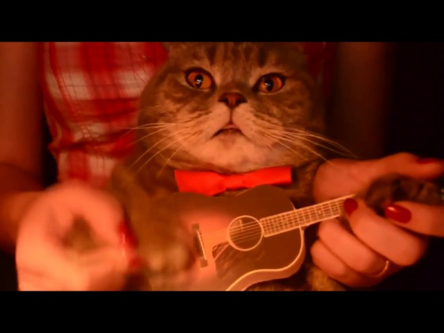 Кот играет на гитаре Somewhere over the rainbow Cat plays guitar Somewhere ove
