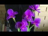 How to make nylon stocking flowers - Iris