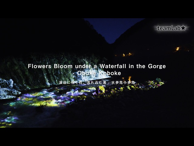 Flowers Bloom under a Waterfall in the Gorge - Oboke Koboke / 溪谷に咲く花、流れ込む滝
