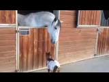 Малыш козленок и лошадка