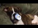 """RAOR0965[1] Всем, у кого есть собака. Вот вам """"Спокойной ночи"""" для ваших любимчиков! :)"""