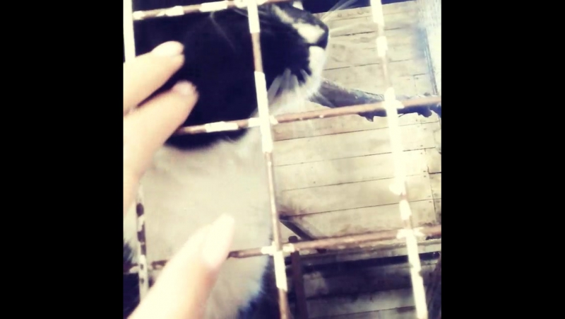 Енотик Сема и кот) Необычное соседство)