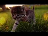 Котики - это тепло и любовь