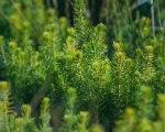 Элиста  может выиграть «Аллею славы» из 600 деревьев
