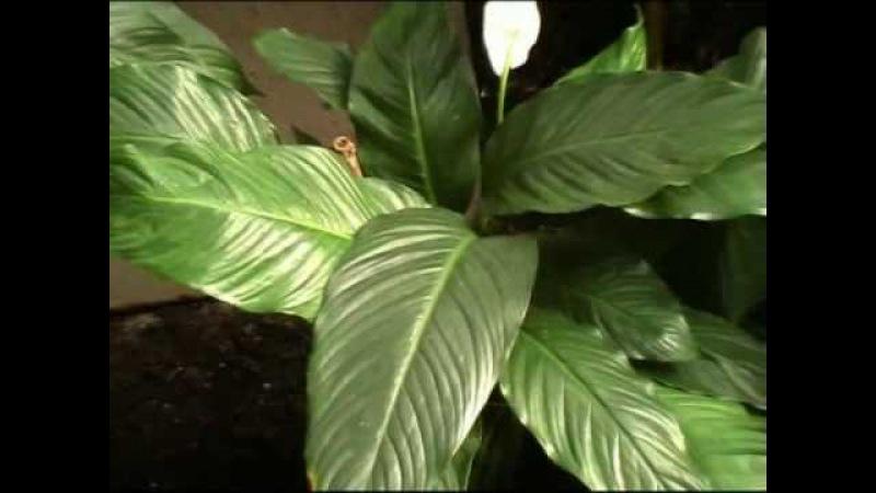 Planten un Blomen