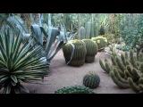Majorelle Garden - Marrakech, Morocco 2013