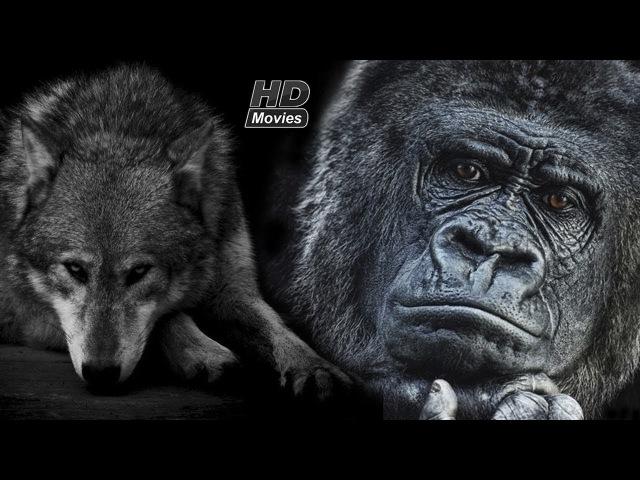 Семь смертных грехов - Зависть (Волк, Горилла)