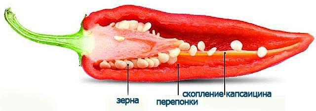 что такое капсаицин