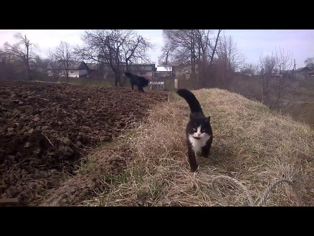 Кошка защищает хозяина Funny cat