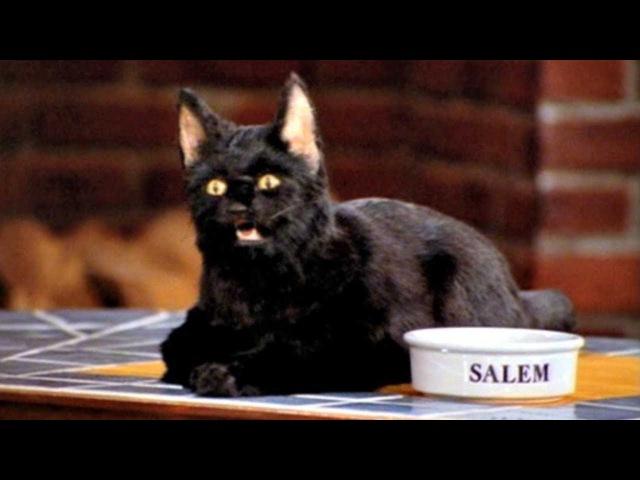 Шутки кота Салема из «Сабрины - маленькой ведьмы»