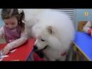 Глазами животных, выпуск 263 Собачья работа которая дарит детям счастье