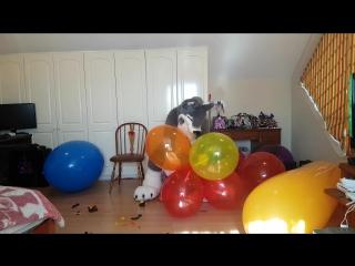 Having fun with balloons part 3 3 (Pop)