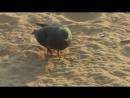 гулька на пляже
