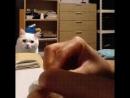 Кот и его любимая игрушка