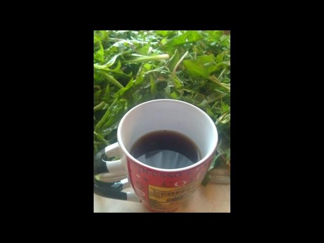 Мой кофе из корня одуванчика заготовка, сушка, напиток