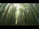 4K Walking in Arashiyama Kyoto Kameyama park and bamboo groove
