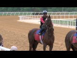 Irish War Cry work ( outside horse) 4 30 2017 at Fair Hill
