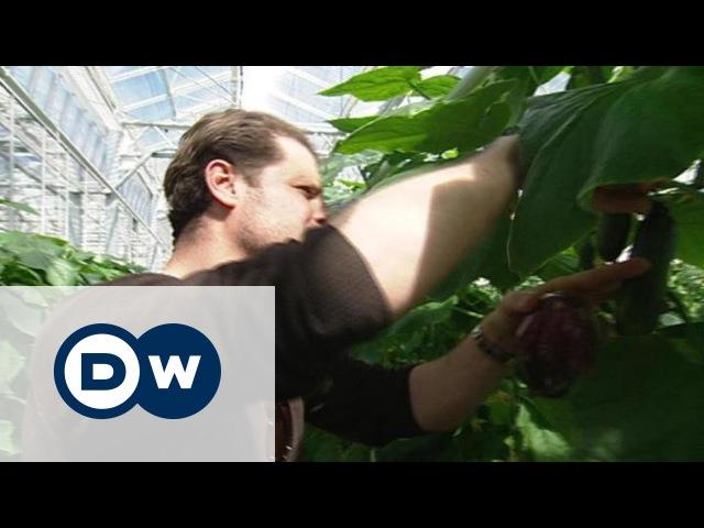 Овощи для столицы: теплицы в центре Берлина