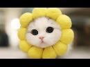 Самые милые котики - Котята, которые поднимут Вам настроение