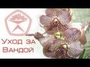 Цветочная База №1 - Как ухаживать за Орхидеей Ванда Vanda