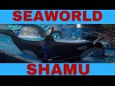 SHAMU ONE OCEAN At Orlando Florida part 2