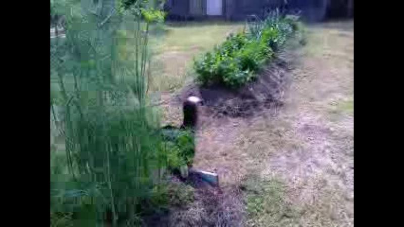 Во саду ли, в огороде... Ириска