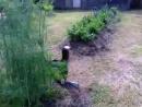 Во саду ли в огороде Ириска