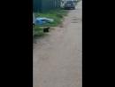 просто кошка играет с мышонком
