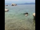 Eva Lovia купается голая на озере с собакой