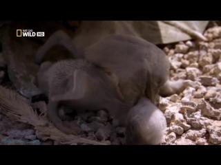 «Бойцовский клуб для животных (03). Потасовка на пляже» (Документальный, 2013)