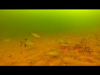 Камера для подводной рыбалки CARPCRUISER