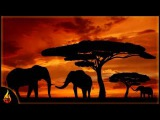 African Music  Baobab  Beautiful Instrumental African Music