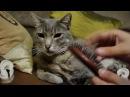 Binaural ASMR - Brushing my cat good for sleep no talking