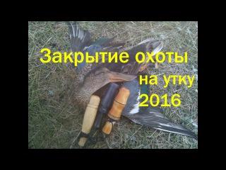 Закрытие охоты на утку 2016. Проверка капканов.