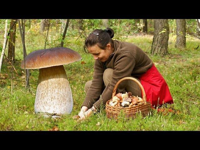 Funghi porcini sorprendete 61