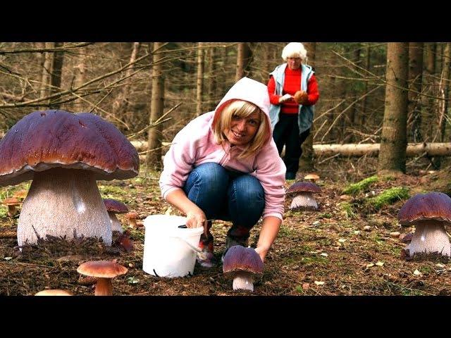 Funghi porcini sorprendete 63