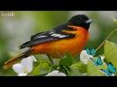 Музыка весны Звуки природы пение птиц