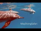 Хроники Майского Сафари. Время ДельфиновThe Chronicles of Safari. The Time of the Dolphins