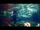 Океанариум в Санкт Петербурге Игра инструктора с акулами