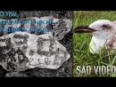 О том, как мы не смогли спасти птичку / Грустное видео